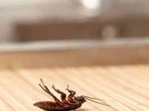 cucarachas en girona